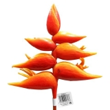 Colony Synthetic Hanging Heliconia Flower Stems (66 Units)